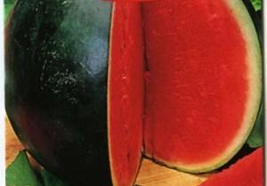 Сорта арбузов: Огонек
